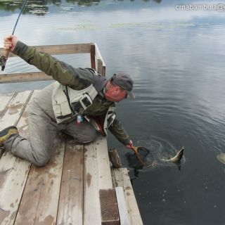 Guest From Swiss First Time Fly Fishing For Pike