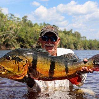 Peacock Bass in Marié River Brazilian Amazon
