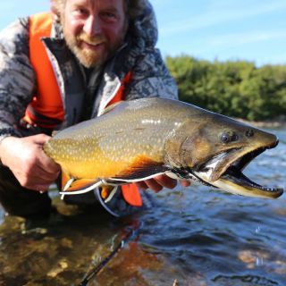 Trophy brook trout