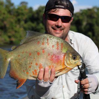 Pacu Borracha - Trombetas River Brazilian Amazon
