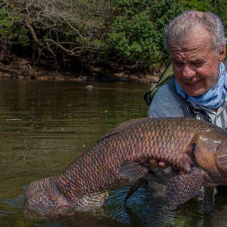 Wolf Fish - Kendjam  Brazilian Amazon