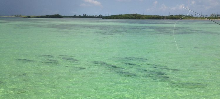 Lower Florida Keys, Key West, Florida Keys, United States