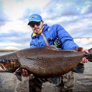 Sea-run brown trout