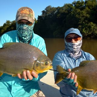 Amazing Double Pacu! as difficult to catch as the Fresh Water Permit