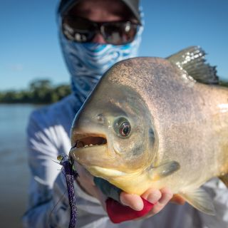 Pacu on fly