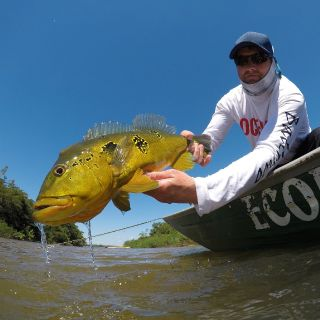 Peacock Bass in Tapajós River  Brazilian Amazon