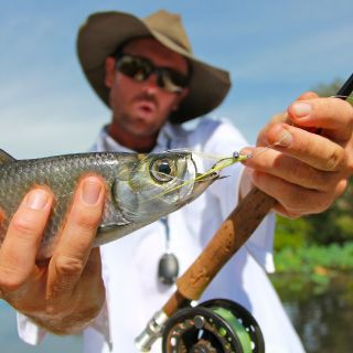 small oxeye tarpon are abundant, but fish to 60cm are common.