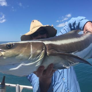 This cobia along with a few of his mates kept us entertained for a while one lovely day in june