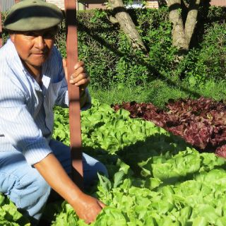 Vegetable garden keeper, don Segundo Collinao shows the beautiful variety of greens ready to go to the kitchen for a fresh daily salad