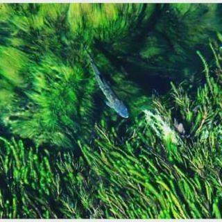 Arco Iris Rio Arrayanes