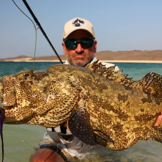 Grouper from Djibouti