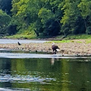Bald eagle seen on famous kayak and boat floats we rent both !