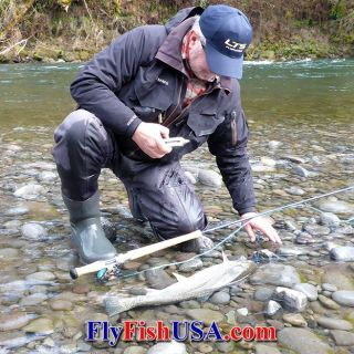 A wild Sandy River steelhead caught with a Skagit style outfit. Released unharmed!