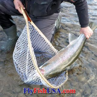 A 39 1/2' wild Sandy River winter steelhead caught with a Spey fly. Released unharmed!