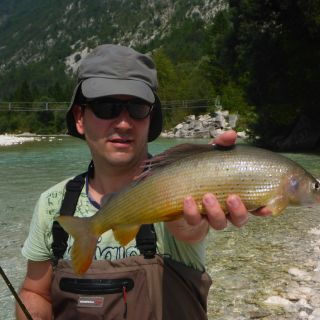The Grayling from the Soca river basin