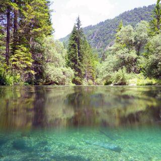 Sava Bohinjka river, Bled fishing area