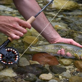 A living jewel - marble trout