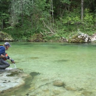 Preparing for the hatch - Sava Bohinjka river
