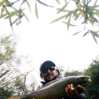 50cm-er, Late October month Sava Dolinka river!