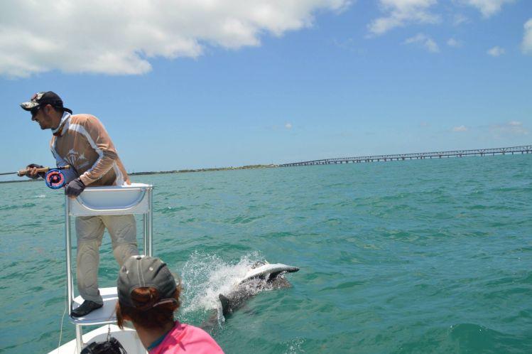 islamorada, Florida Keys, Florida, United States