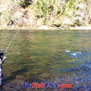 The Sandy River in Oregon is one of the finest winter steelhead fly fishing rivers in the Pacific Northwest.