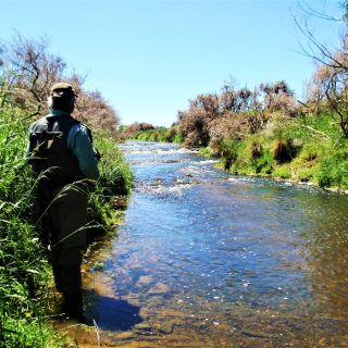 Hunting brown trout in a little but productive stream in Southland.