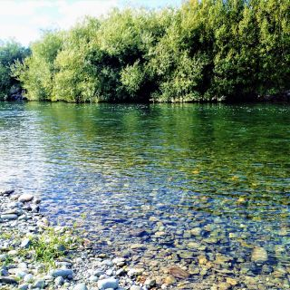 'Gin' clear waters of the Mataura River allow sightfishing to large brown trout.