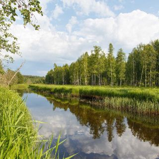 Big trouts section in Estonian river