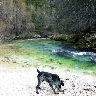 A hidden spot of the Radovna river - Slovenia.. only a hunting dog could found it :-)