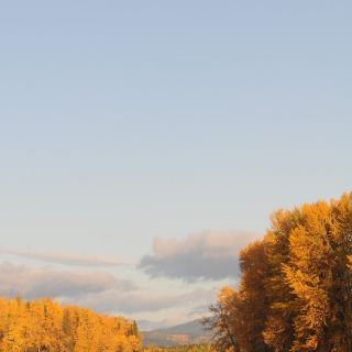 The Bulkley River in its fall colors.