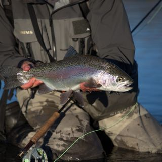 Client Patricio (Argentina) Fiordland Rainbow Trout South Island  New Zealand Guide: Chris Reygaert