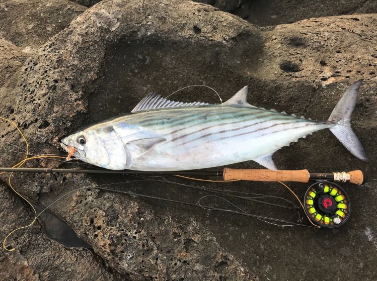 Silk Fly Lines in Saltwater: Casting in the face of the Alisios