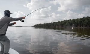 Everglades national park, Miami, Florida, United States