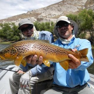 A beautiful brown on a dry fly sight fishing!