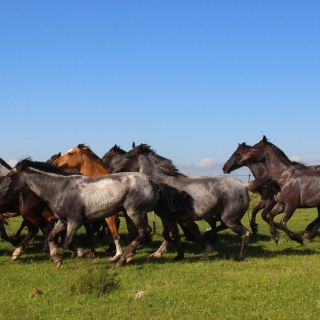 Grasslands and Horses
