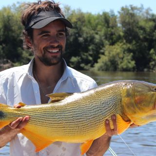 Dorados on the fly