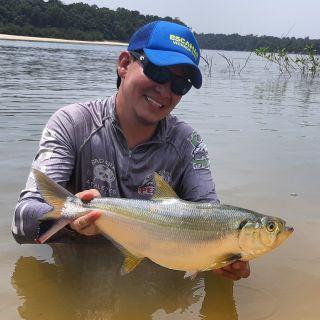 la sardinata otra especie espectacular para la pesca deportiva de nuestra Orinoquía colombiana. hermoso color dorado que da visos la sol, pelea con grandes y muchos  saltos uno de los grandes trofeos soñados.