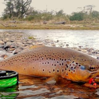 Brown trout of Varela Lagoon