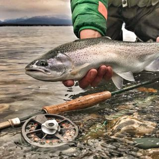 Fagnano Lake, rainbow trout is the fish most hard in catch in Tierra del Fuego.