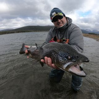 Brown trout on Santa LAura lagoon, Ushuaia