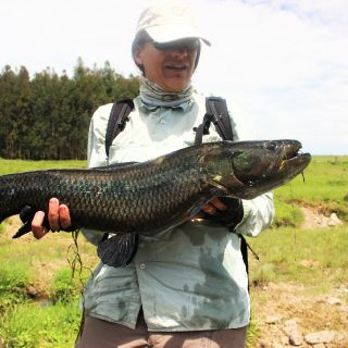 Awesome Fish in small creeks !