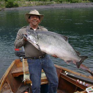 Chinook silver , con mosca . Rio Petrohue.