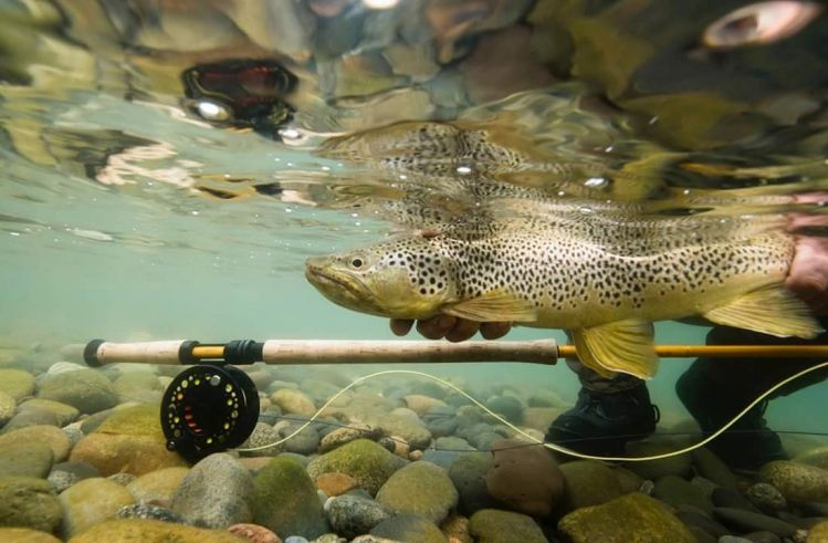 """The Story of """"Catch & Release"""" in Patagonia (and Argentina)."""