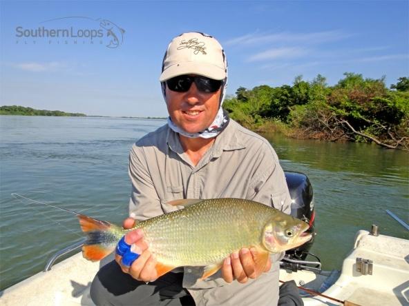 Golden Pira Pita or Golden River Salmon. Pira Pita, o Salmón de Río, Dorado.
