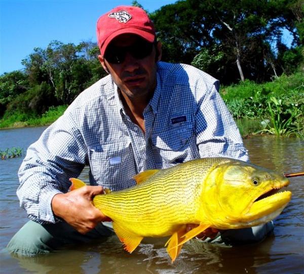 Martin Tagliabue 's Fly-fishing Catchof a Golden Dorado– Fly dreamers