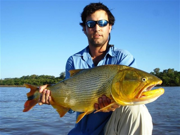 Luis San Miguel 's Fly-fishing Photo of a Golden Dorado – Fly dreamers