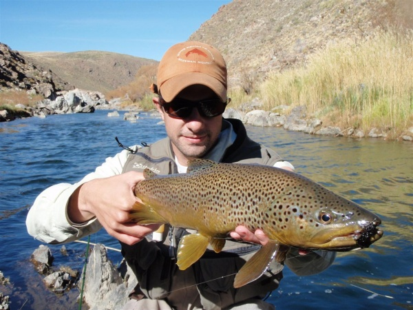 Fly-fishing Image of Brown trout shared by Mariano Ferrara – Fly dreamers