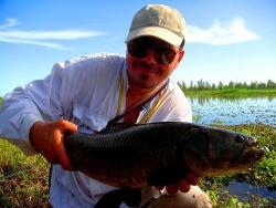 Wolf Fish (Hoplias malabaricus)