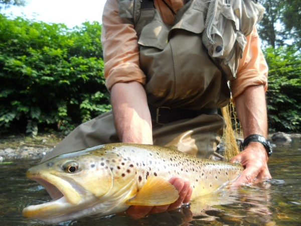 Cool Fly-fishing Picture shared by Jim Misiura – Fly dreamers