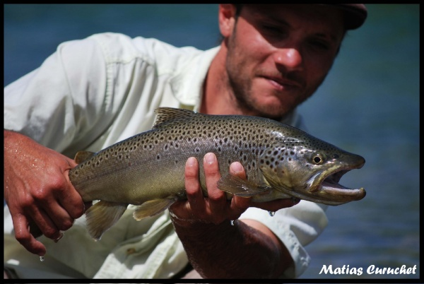 Matias Curuchet 's Fly-fishing Pic of a Brown trout – Fly dreamers